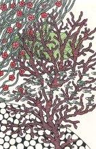 vingt-mille-lieues-sous-les-mers-jules-verne-illustration-aude-villerouge-jpg