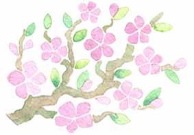 fleur-de-ceriser-japonais-sakura-illustration-aude-villerouge.jpg