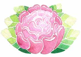 fleur-pivoine-rose-illustration-aude-villerouge.jpg
