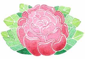 fleur-pivoine-rouge-illustration-aude-villerouge.jpg