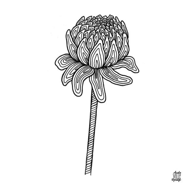 coloriage-Dahlia-1-illustration-aude-villerouge