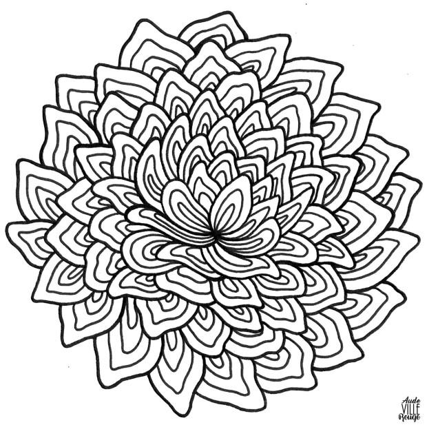 coloriage-Dahlia-2-illustration-aude-villerouge