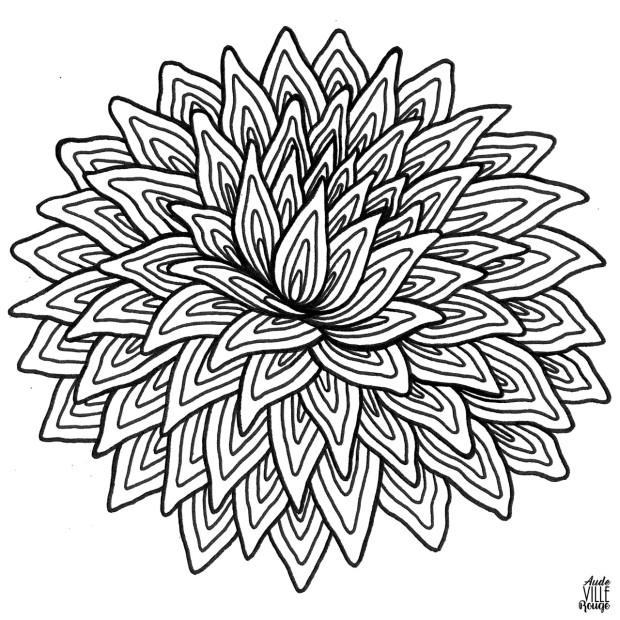 coloriage-Dahlia-3-illustration-aude-villerouge